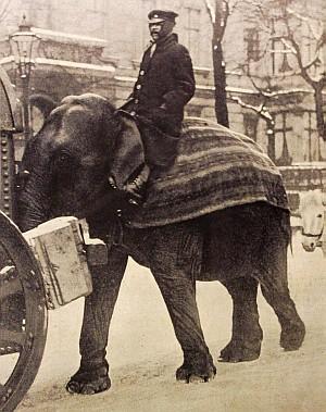 Elefant im Kriegseinsatz in Berlin (Berliner Illustrirte Zeitung Nr. 1, 1918)